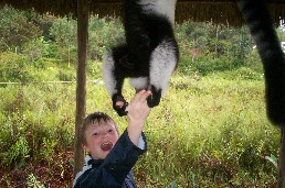 Sebastian with Lemur, on trip to Madagascar